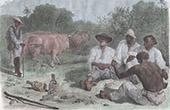 Card Game - Vaqueros in Panama