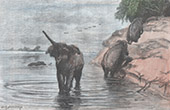 Wounded Elephant - Se Bang Hieng River (Laos)