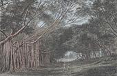 Botanisk Tr�dg�rd i Bogor - Kebun Raya Bogor - Jawa Barat (Indonesien)