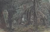 Ferns in Blackspur (Australia)