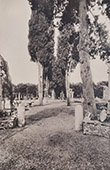 Former Villa Massimi - Cupressus and Ancient Fragments (Rome)