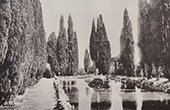 Villa Falconieri (Frascati - Latium) - Cupressus - Reflecting pool