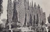 Villa Falconieri (Frascati - Latium) - Cupressus