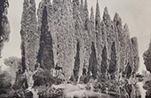 Villa Falconieri (Frascati - Latium) - Cypr�s