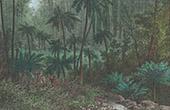 Tr�dormbunkar - Queenslands (Australien)