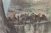 Convoy of Mules - Abra del Cóndor (Argentina)