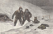 Sledge Dogs - Polar Expedition of the Dr. Pavy - Lady Franklin Bay - Qikiqtaaluk - Nunavut - Nares Strait - Ellesmere Island (Canada)