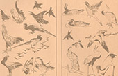 Japansk konst - Dekoration - Fåglar (Hokusaï)