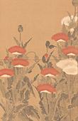 Japanische Kunst - Dekoration - Kakemono - Mohn (Kôrin)