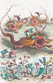 Vita Privata e Pubblica degli Animali - Racconti Satirici - Caricatura - Steeple Chase - Corsa di Cavallo - Molluschi