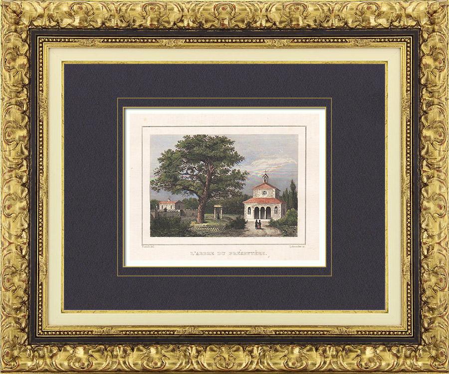 Gravures Anciennes & Dessins   L'Arbre du Presbytère (Landes - France)   Taille-douce   1838