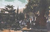 J�rusalem - Jardin de Geths�mani  - Mont des Oliviers - Passion du Christ (Isra�l)