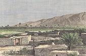 Palmenhain in Ahram - Bushehr - Tangestan - Persischer Golf (Iran)