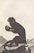 Monkey - Tamarin - Saguinus - Callitrichidae - Mammals - Primates