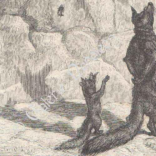 räven och druvorna