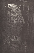 Fables of Aesop - The Owl and the Cicada (Ernest Griset)
