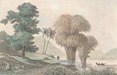 Borneo - Camphor and Bamboo (Malay Archipelago)