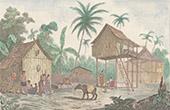 Malaisie - Case Malaise - Animal - Ma�ba (Asie)