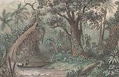Australien - Munin Sima Wald - Prim�rwald (Ozeanien)