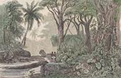 Australien - Prim�rwald (Ozeanien)