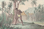 Pacific Islands - French Polynesia - Indigenous people - Cultivation of sugarcane