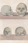 Caroline Islands - Gouap Island - Men and Women's Skulls (Oceania)