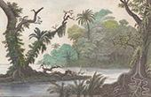 Karolinerna - Ualan - Lual Flod (Oceanien)