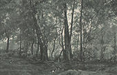 Magpie - Bocage's Landscape (Hector Hanoteau)