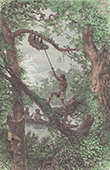 Amerindiens - Wayana - Jagd auf Faultiere (Bergland von Guayana)