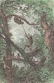 Aboriginal Peoples - Wayana People - Sloth Hunting (Guiana Shield)