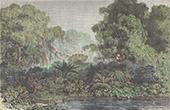 Affen - Provinz Dari�n (Panama)