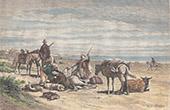 Fall of a Horse near Sousse (Tunisia)