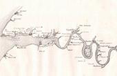 Antique map - France - Seine - Seine-Maritime - Rouen - Caudebec - Honfleur - Le Havre