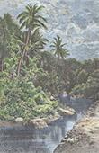 Ansicht von Timor - Wald - Kupang - Sundainseln (Indonesien)