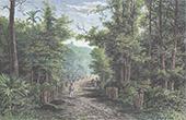 Vy �ver Palembang - Sakral skog - Kraton (Indonesien)