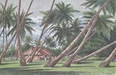 Französisch-Polynesien - Tuamotu-Archipel (Übersee-collectivity - Frankreich)