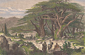 Paysage du Liban - C�dres du Liban