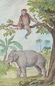 Elefant - Schimpansen (Alte Afrika)