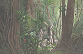 Amazonische Wald - Bitte von Indigen V�lker (Brasilien)