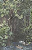 Rossel Island - Louisiade Archipelago - Mouillage River (Papua New Guinea)