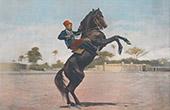 Pferd und Reiter (Frankreich)