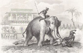 Execution - Crushing by Elephant - A Condemned Prisoner being Dismembered by an Elephant in Ceylon (Sri Lanka)
