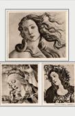 The Birth of Venus - Madonna of the Magnificat - Minerva - Athena - Pallas and the Centaur (Sandro Botticelli)