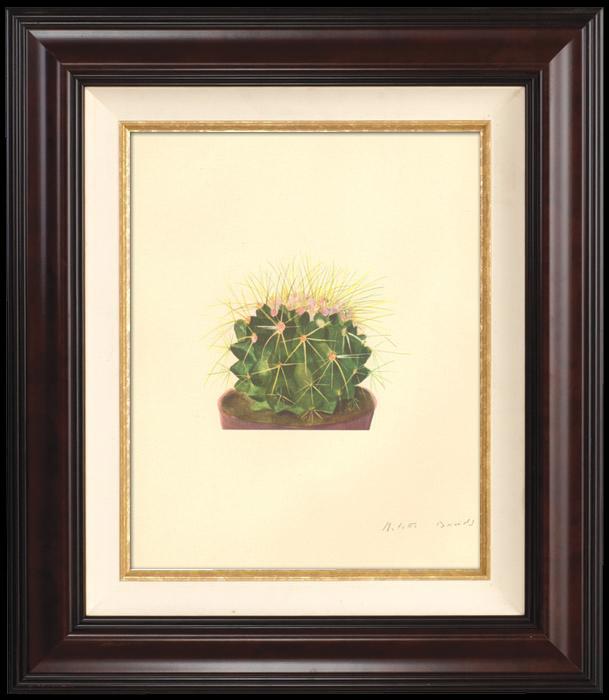 Gravures Anciennes & Dessins | Botanique - Végétaux - Plantes et Fleurs - Plante Grasse - Cactus (1) | Planche | 1939