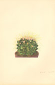 Botany - Vegetable - Plants and Flowers - Succulent - Cactus (1)