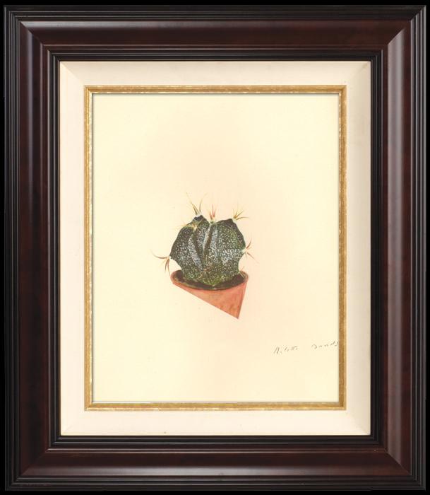 Gravures Anciennes & Dessins | Botanique - Végétaux - Plantes et Fleurs - Plante Grasse - Cactus (2) | Planche | 1939