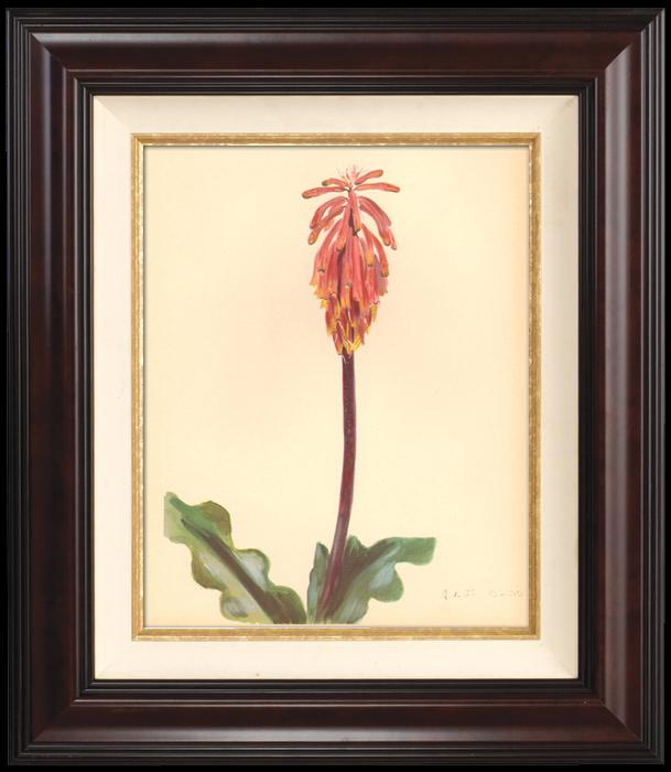 Gravures Anciennes & Dessins | Botanique - Végétaux - Plantes et Fleurs - Plante Grasse | Planche | 1939