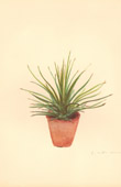 Botany - Vegetable - Plants and Flowers - Succulent - Cactus (4)