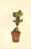 Botany - Vegetable - Plants and Flowers - Succulent - Cactus (5)