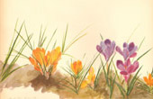 Botany - Vegetable - Plants and Flowers - Crocus